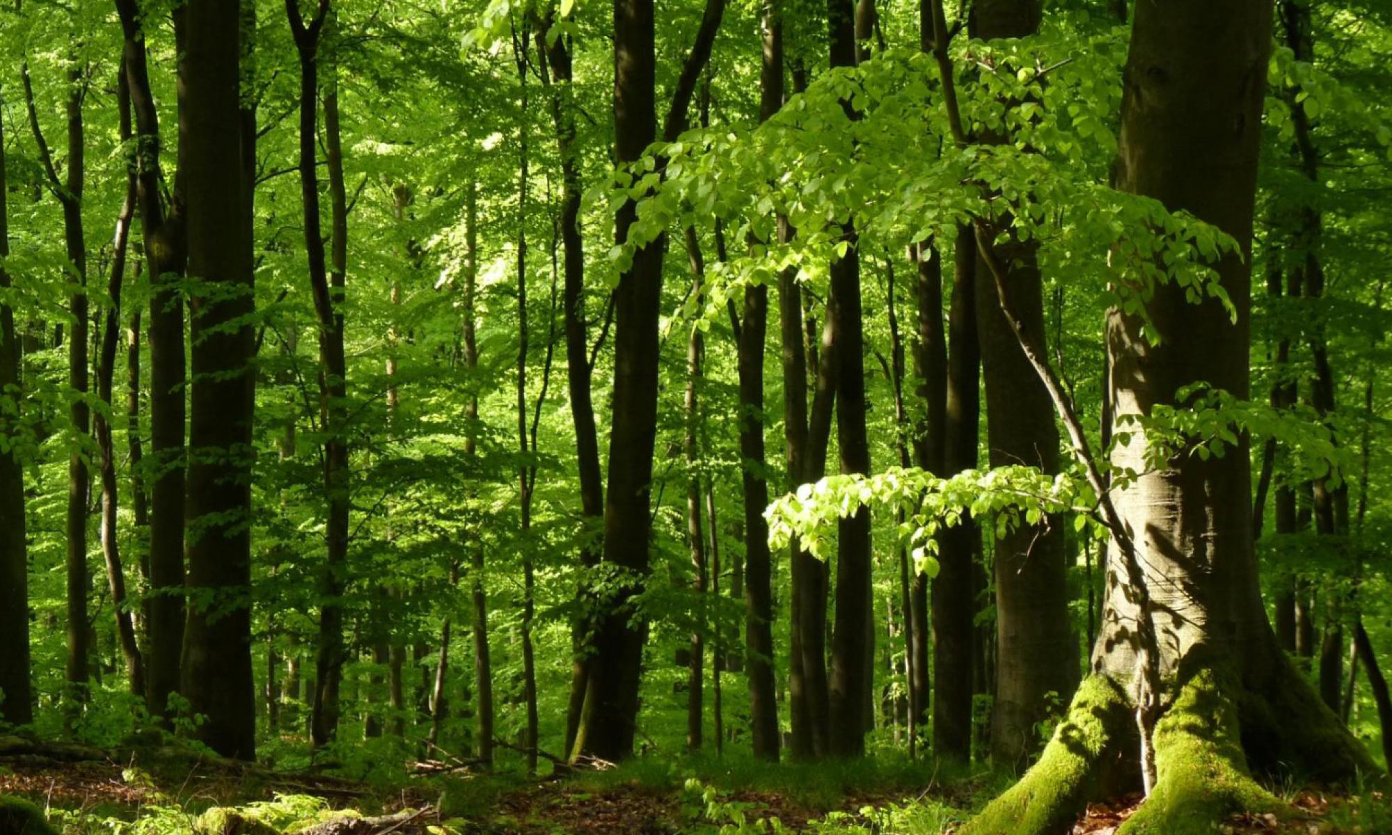 Wald-Neuried-Erhalten